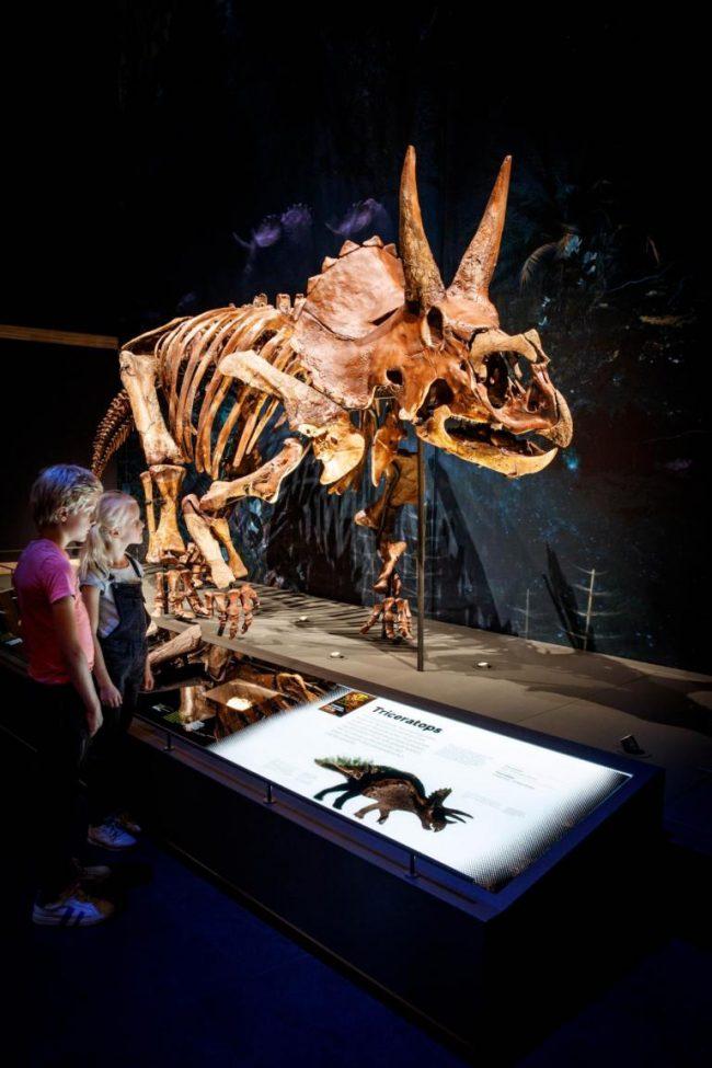 T rex trix naturalis